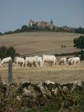 Catlle e castello Fotografia Stock