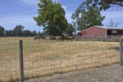 Catlles i en landslantgård Oregon Arkivbilder