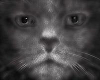 Catman royalty free illustration