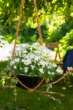 Catmint and Bornholm Magerite in a hanging basket. Catmint and Bornholm Magerite with white blossoms in a creative styled hanging basket Stock Photos