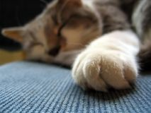 Catnap Stock Images