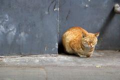 catnap Images libres de droits