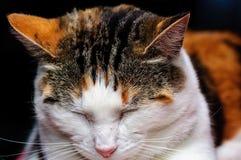 catnap Stock Foto's