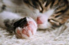 Catnap Stock Image
