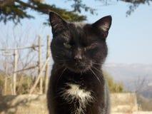 Catness Стоковая Фотография RF
