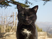 Catness Royalty-vrije Stock Fotografie