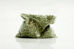 Catnip. A baggie filled with dried catnip royalty free stock image