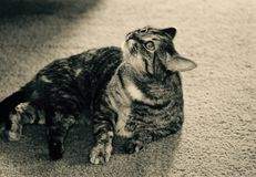 Catnip Kitty fotografia stock libera da diritti