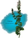Catnip Royalty Free Stock Image