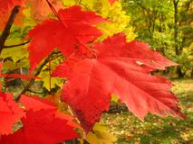 Free Catoctin Colors Stock Photography - 3533222