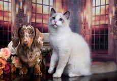 Котенок и щенок стоковое фото rf