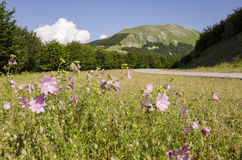 Catria mountain. In the Marche region, Italy Royalty Free Stock Photography