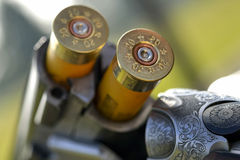 Catridges in shotgun barrel. Closeup of two cartridges in barrel of over and under shotgun Stock Photos