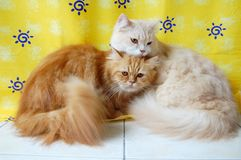 Cats Royalty Free Stock Photo