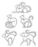 Cats. On a white background Stock Image