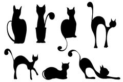 Cats. There are seven cats in different positions Stock Image