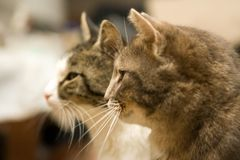 Cats. Some cats looking at the same direction Royalty Free Stock Photo