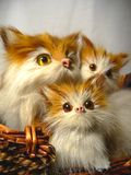Cats. Cat family in the basket Royalty Free Stock Images