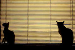 Cats. Two cats by the window Stock Photography