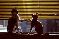 Cats. Two cats by the window Royalty Free Stock Photo