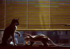 Cats. Two cats by the window Royalty Free Stock Photos