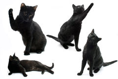 Cats. Black cats isolated on a white background Stock Photos