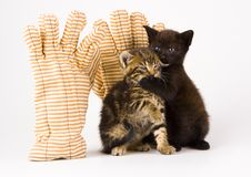 Cats Stock Photography