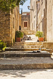 Cats. In a narrow street of erice Royalty Free Stock Photo