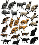Cats. A collection of 5 different cats and poses. Grey Tabby, Siamese, Calico, Red Tabby and Black Cat. In various poses for various types of projects Stock Images