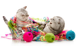 Cats Stock Image
