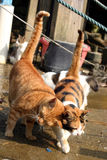 Cats. Happy together Royalty Free Stock Images