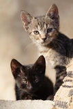 Cats. Two pussy cats, one black, and one tabby Stock Image