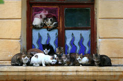 Cats. It is removed in the street, without a support, an impromptu royalty free stock photography