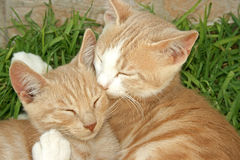 The cats. The sleeping cats on the grass Royalty Free Stock Photo