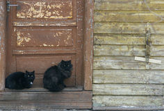 Cats. Two black cats stock image