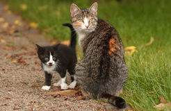 Cats. Mothercat with her young kitten is sitting in the garden Stock Photo