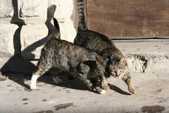 Cats. Alley cats royalty free stock images