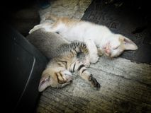 Cats. Two cosey cats cuddling together Stock Photography