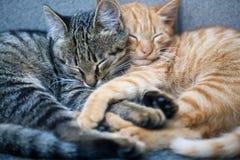 Free Cats Royalty Free Stock Photo - 6634975