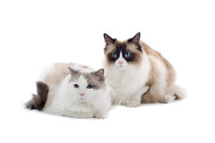 Free Cats Stock Images - 6919034