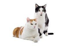 Cats Stock Photo