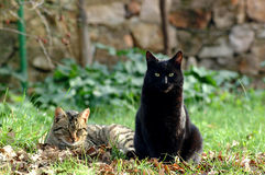 CATS. Friends enjoy on grass Royalty Free Stock Images
