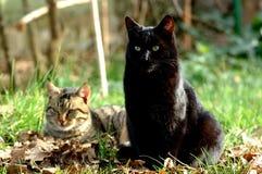 CATS. Friends enjoy on grass Stock Image