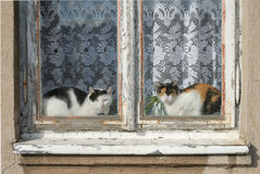 Cats. Two cats sitting in a window and looking through stock photography