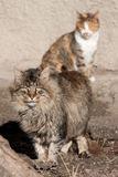 Cats. Loving cats at the spring Stock Image