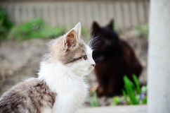 Free Cats Stock Images - 89096444