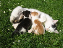 Cats. Two kittens and white cat in the garden Stock Image