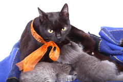 Cats Royalty Free Stock Photos