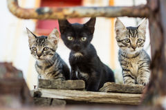 Cats on Abandoned Old Rusty Ship. Three Cute Cats on Old Wooden Pallet Stock Image