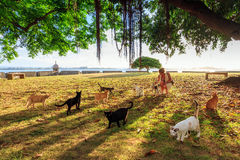 Cats afternoon. Beautiful woman playing with stray cats in the afternoon in San Juan, Puerto Rico Stock Photography